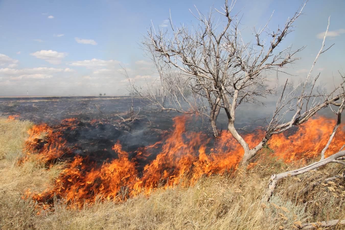 хопкинс картинка степного пожара получением среднего